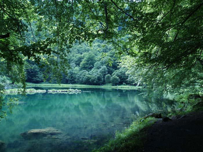 Déclinaison du vert ... dans Belles images 7ca0o8gn