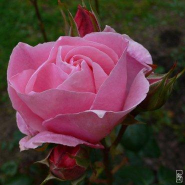 le langage des fleurs 35