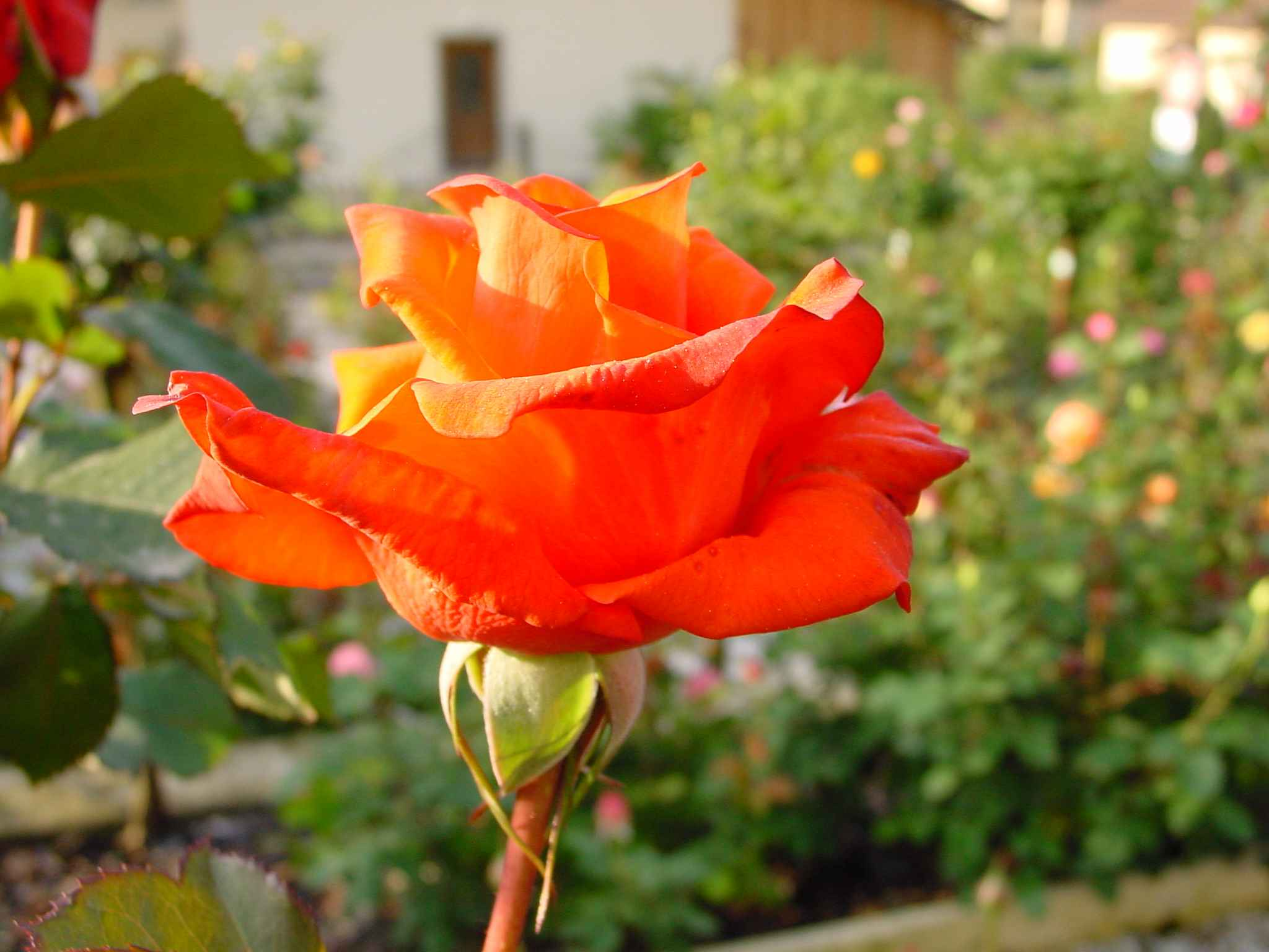 le langage des fleurs 36