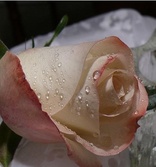 Ce dimanche c'est la Fête des Roses ! dans Autres fêtes ou évènements zmg9xvag